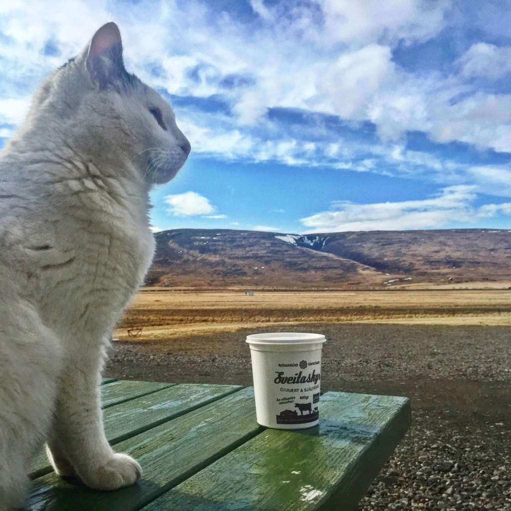 cat with skyr